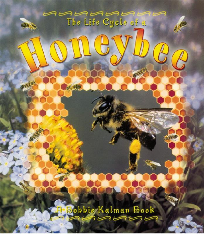 The Life Cycle of a Honeybee - PB