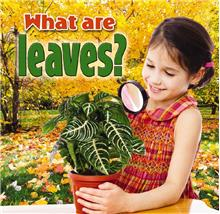 What are leaves? - PB