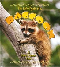 The Life Cycle of a Raccoon - HC