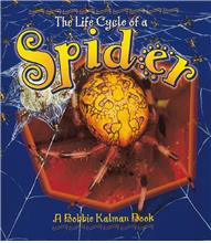 The Life Cycle of a Spider - PB