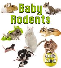 Baby Rodents - PB