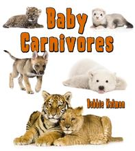 Baby Carnivores - PB