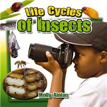 Life Cycles of Insects - HC