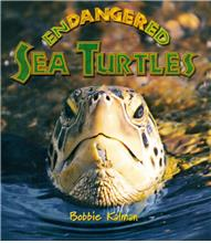Endangered Sea Turtles - PB