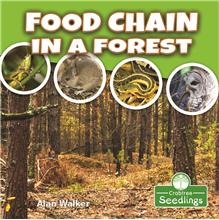 Food Chain in a Forest - PB