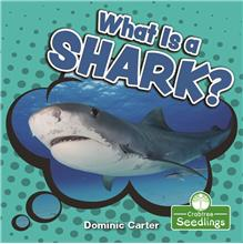 What Is a Shark? - PB