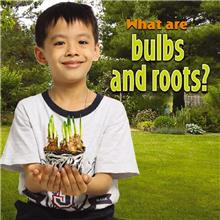 What are bulbs and roots? - PB
