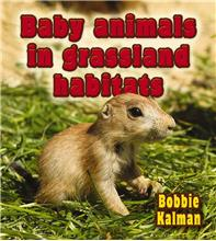 Baby animals in grassland habitats - HC