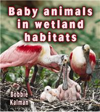 Baby animals in wetland habitats - HC
