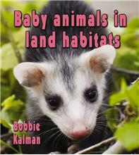 Baby animals in land habitats - HC
