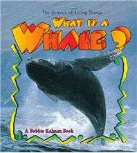What is a Whale? - eBook