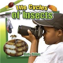 Life Cycles of Insects - eBook