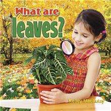 What are leaves? - eBook