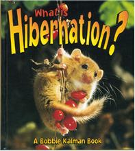 What is Hibernation? - PB