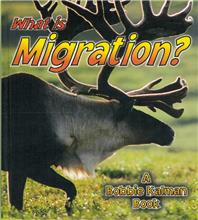 What is Migration? - PB