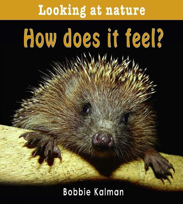 How does it feel? - eBook