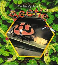 The Life Cycle of a Beetle - HC