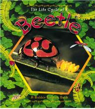 The Life Cycle of a Beetle - PB