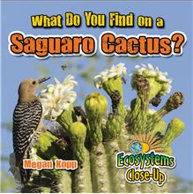 What Do You Find on a Saguaro Cactus? - HC