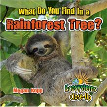 What Do You Find in a Rainforest Tree? - PB