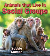 Animals that Live in Social Groups - PB