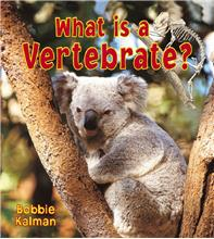 What is a Vertebrate? - PB