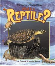 What is a Reptile? - PB