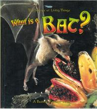 What is a Bat? - PB