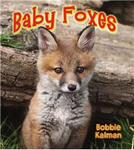 Baby Foxes - eBook