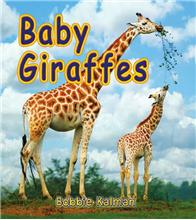 Baby Giraffes - eBook