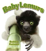 Baby Lemurs-ebook